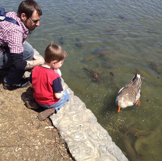 Spring Feeding Fish & a Goose | via Mintgrapefruit.com